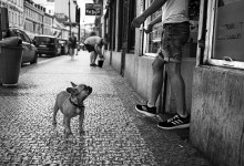Dogs of Prague, Humans of Prague
